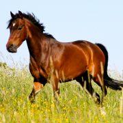 Motiv_Pferd