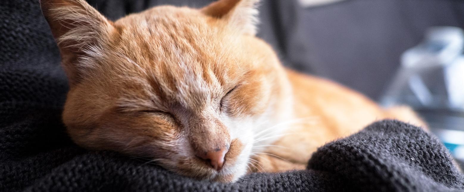 Gezielte Nahrungsergänzung für Katzen